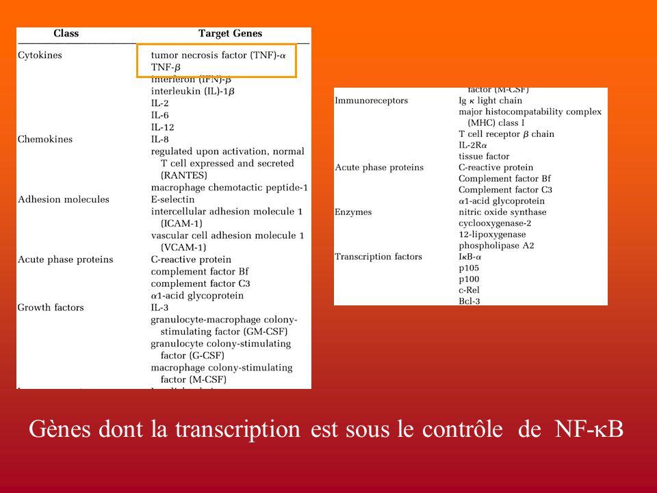 Gènes dont la transcription est sous le contrôle de NF-kB