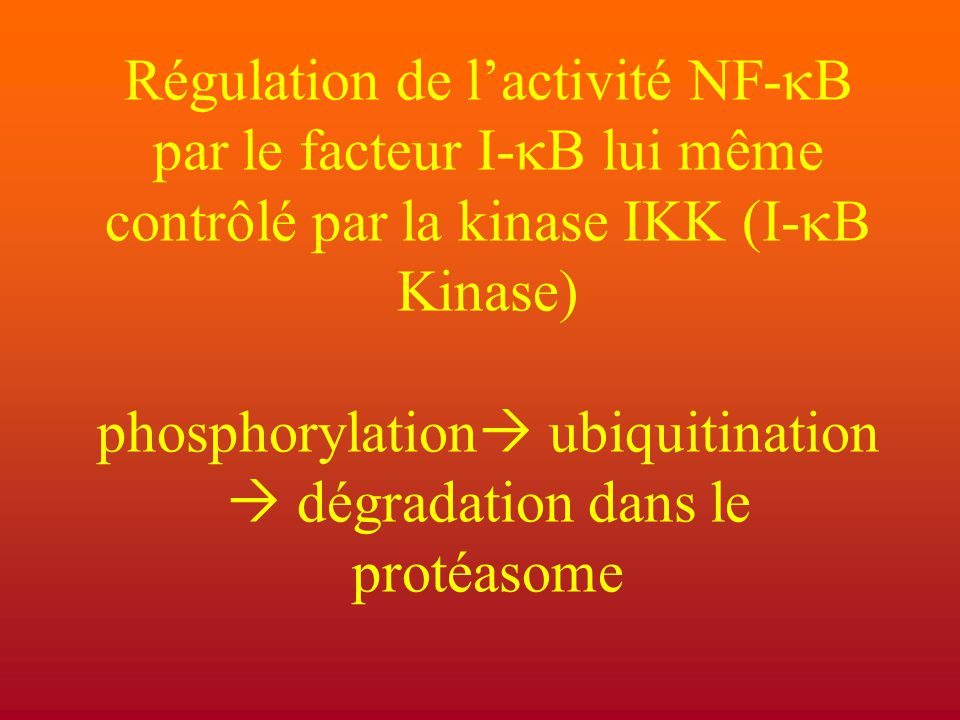 Régulation de l'activité NF-kB par le facteur I-kB lui même contrôlé par la kinase IKK (I-kB Kinase) phosphorylation ubiquitination  dégradation dans le protéasome