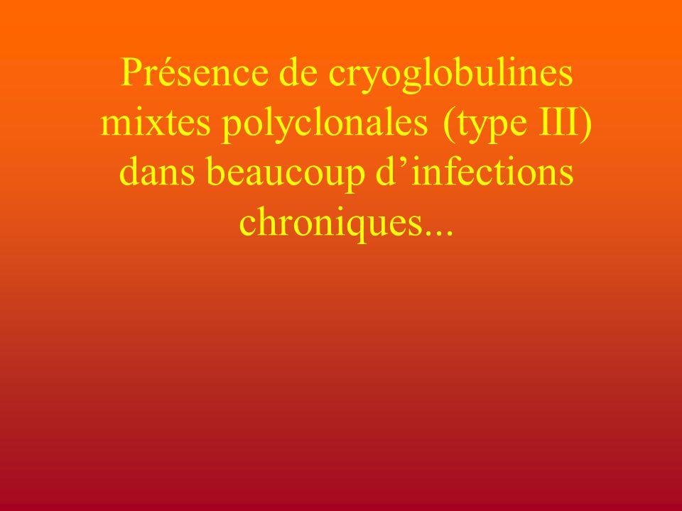 Présence de cryoglobulines mixtes polyclonales (type III) dans beaucoup d'infections chroniques...