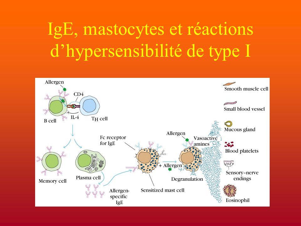 IgE, mastocytes et réactions d'hypersensibilité de type I