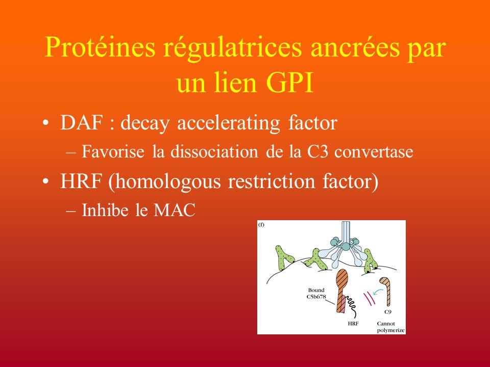 Protéines régulatrices ancrées par un lien GPI