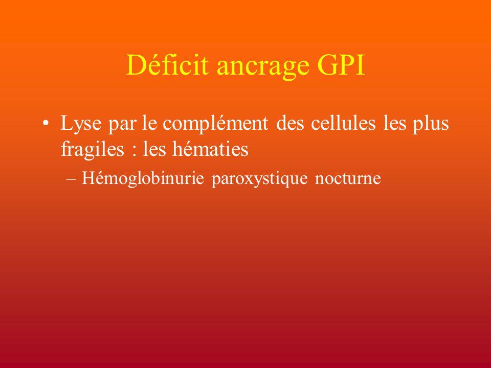 Déficit ancrage GPI Lyse par le complément des cellules les plus fragiles : les hématies.