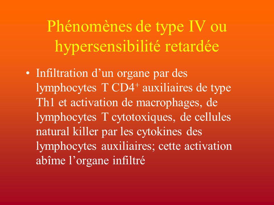 Phénomènes de type IV ou hypersensibilité retardée