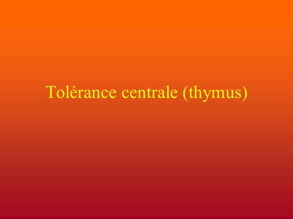 Tolérance centrale (thymus)