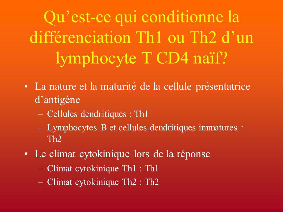Qu'est-ce qui conditionne la différenciation Th1 ou Th2 d'un lymphocyte T CD4 naïf