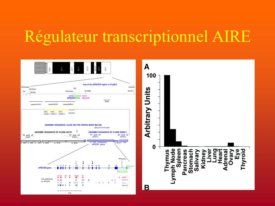 Régulateur transcriptionnel AIRE