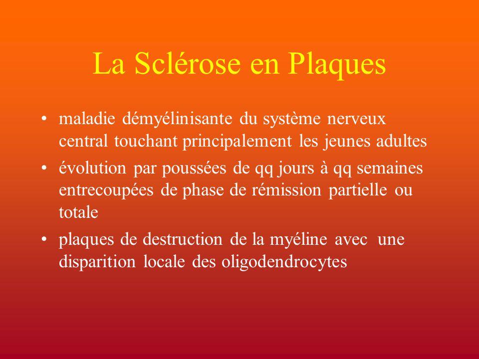 La Sclérose en Plaques maladie démyélinisante du système nerveux central touchant principalement les jeunes adultes.