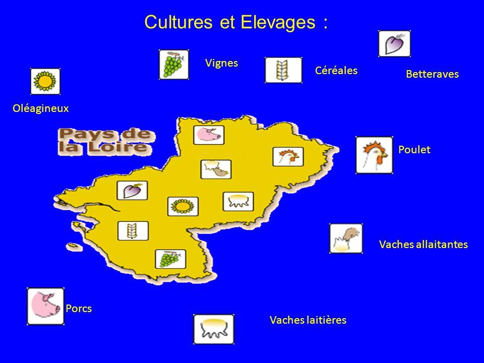 Cultures et Elevages : Vignes Céréales Betteraves Oléagineux Poulet