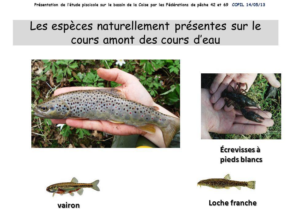 Les espèces naturellement présentes sur le cours amont des cours d'eau