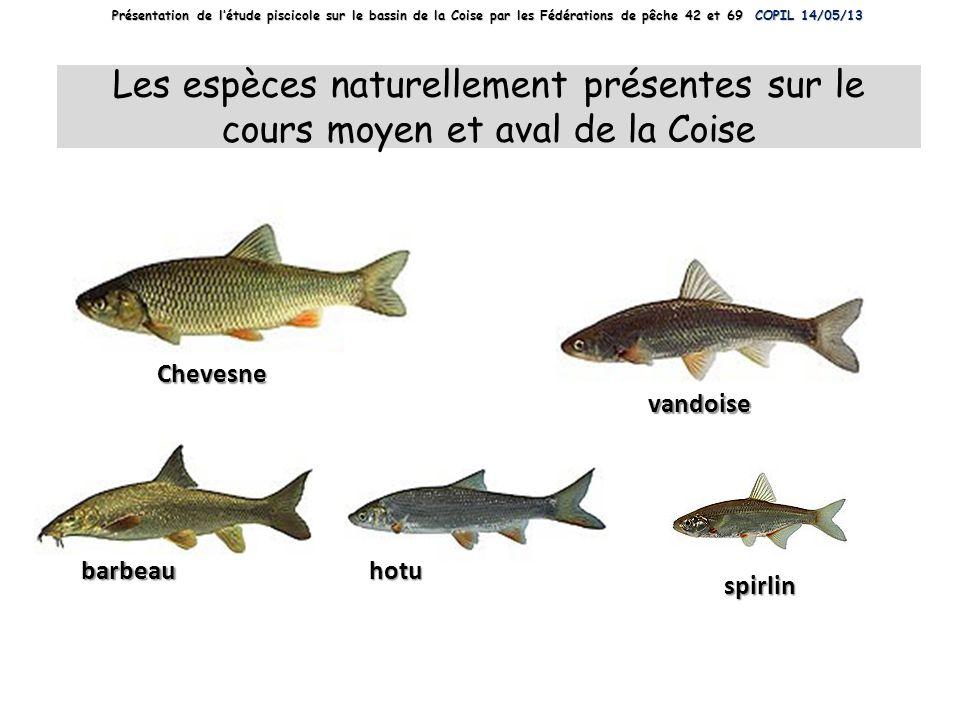 Présentation de l'étude piscicole sur le bassin de la Coise par les Fédérations de pêche 42 et 69 COPIL 14/05/13