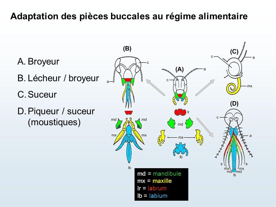 Adaptation des pièces buccales au régime alimentaire
