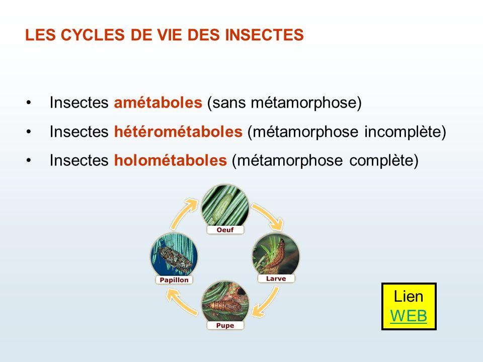 LES CYCLES DE VIE DES INSECTES