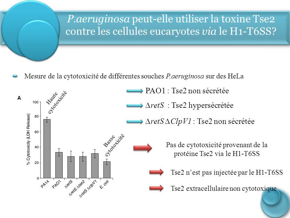 Pas de cytotoxicité provenant de la protéine Tse2 via le H1-T6SS