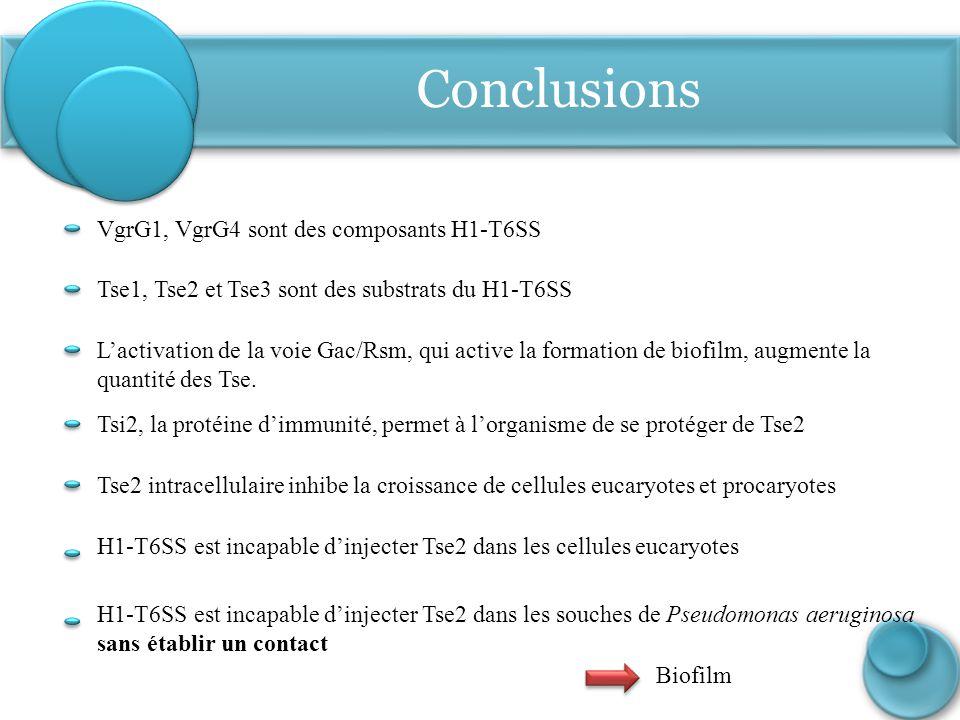 Conclusions VgrG1, VgrG4 sont des composants H1-T6SS