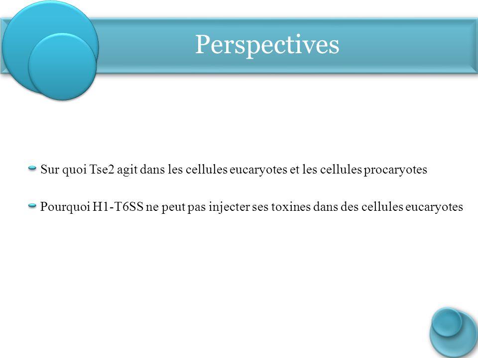 Perspectives Sur quoi Tse2 agit dans les cellules eucaryotes et les cellules procaryotes.