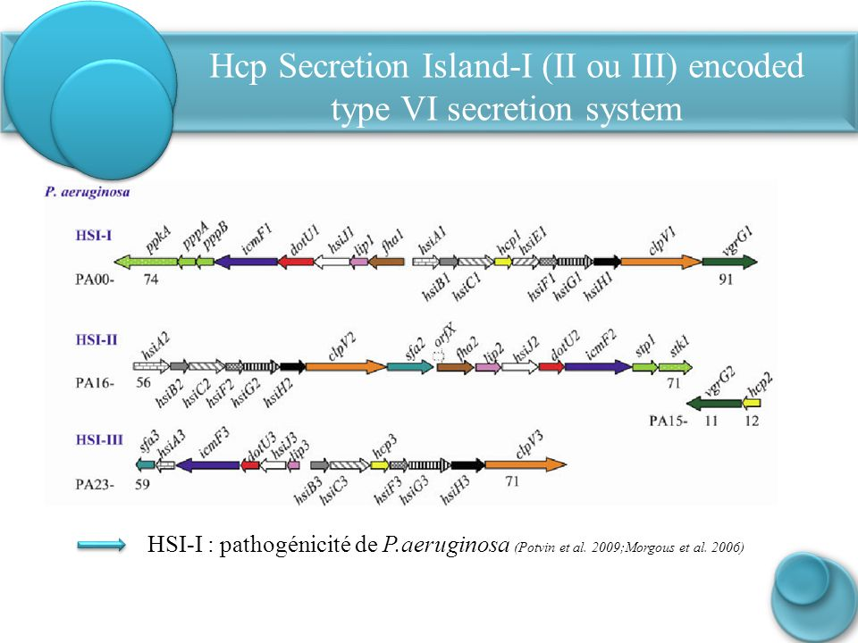 Hcp Secretion Island-I (II ou III) encoded type VI secretion system