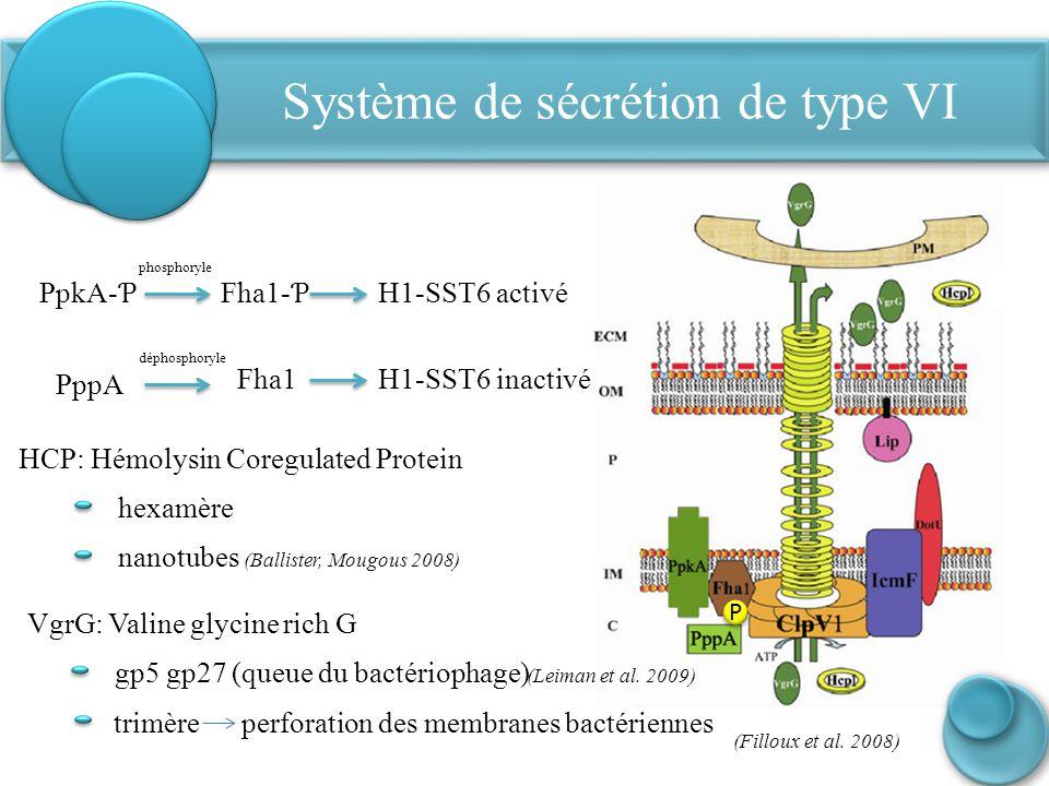 Système de sécrétion de type VI