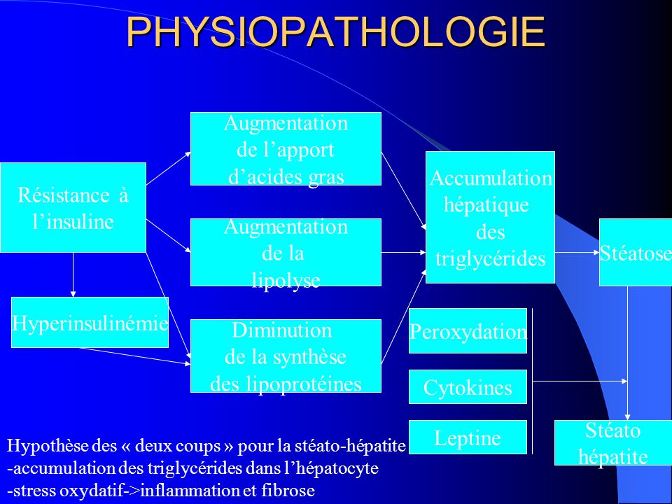 PHYSIOPATHOLOGIE Augmentation de l'apport d'acides gras Accumulation