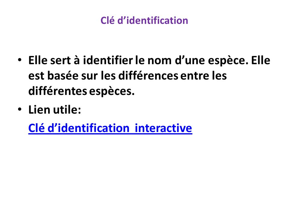 Clé d'identification interactive