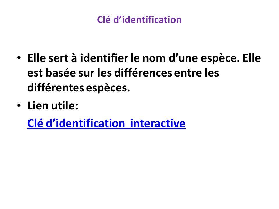 Clé d'identification interactive