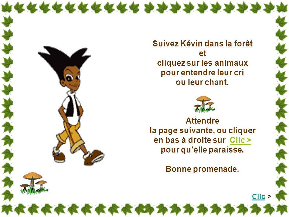 Suivez Kévin dans la forêt cliquez sur les animaux