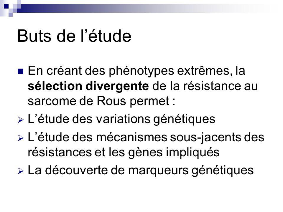 Buts de l'étude En créant des phénotypes extrêmes, la sélection divergente de la résistance au sarcome de Rous permet :