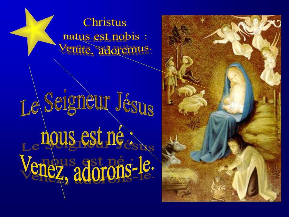 Christus natus est nobis : Venite, adoremus. Le Seigneur Jésus nous est né : Venez, adorons-le.