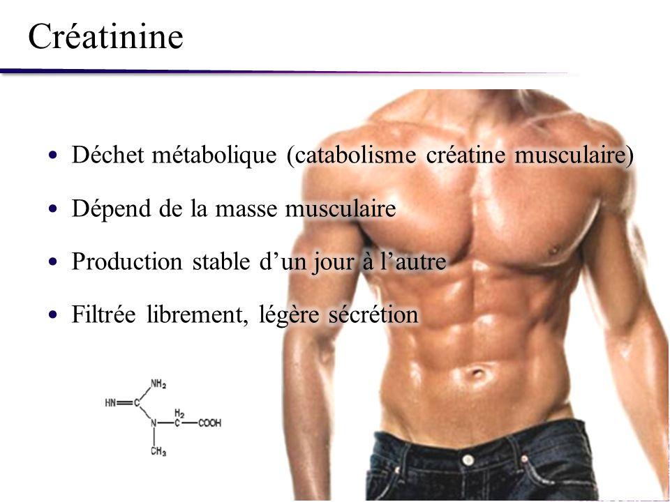 Créatinine Déchet métabolique (catabolisme créatine musculaire)