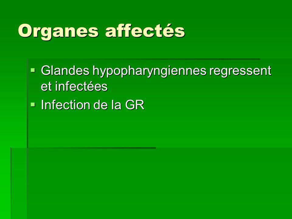 Organes affectés Glandes hypopharyngiennes regressent et infectées