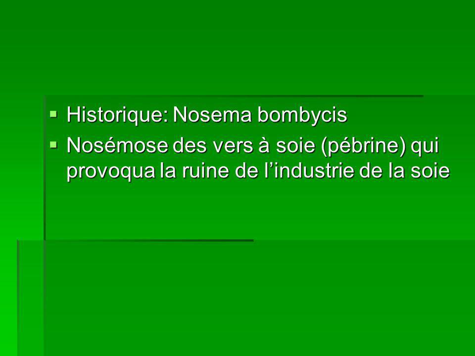 Historique: Nosema bombycis
