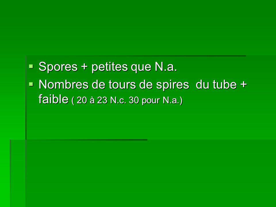 Spores + petites que N.a. Nombres de tours de spires du tube + faible ( 20 à 23 N.c. 30 pour N.a.)