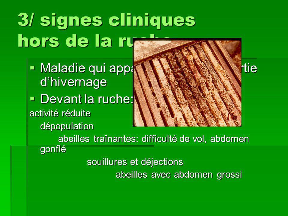 3/ signes cliniques hors de la ruche