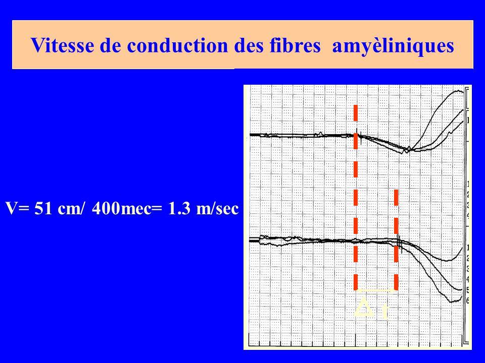 Vitesse de conduction des fibres amyèliniques
