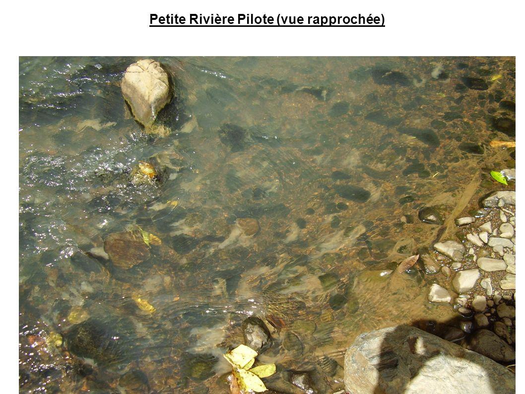 Petite Rivière Pilote (vue rapprochée)