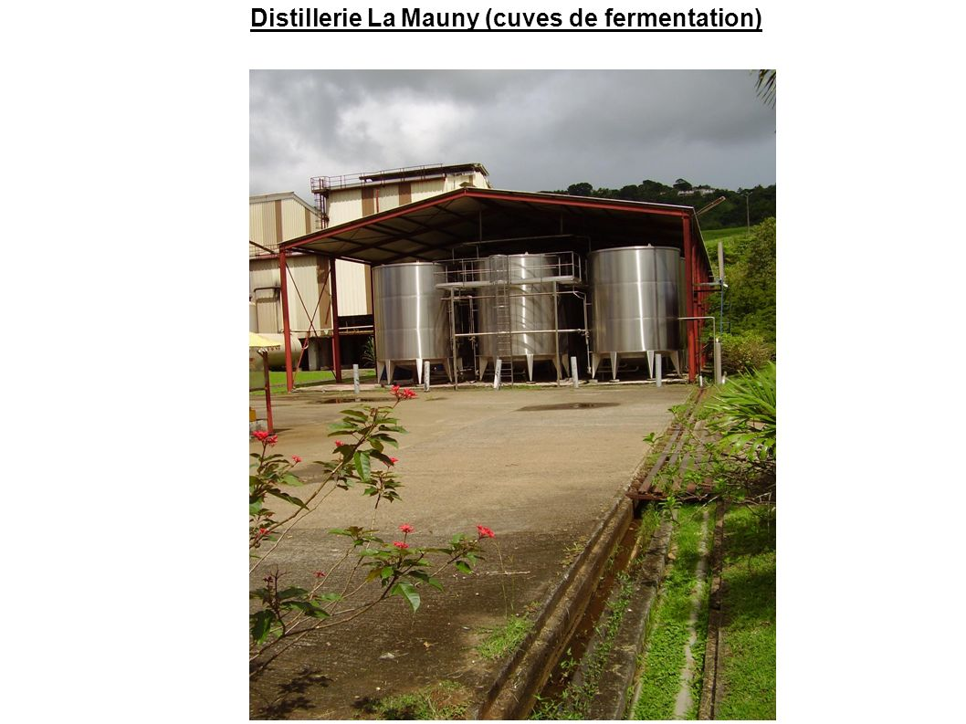 Distillerie La Mauny (cuves de fermentation)