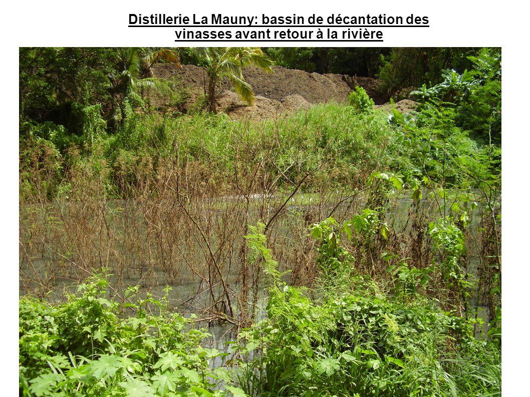 Distillerie La Mauny: bassin de décantation des vinasses avant retour à la rivière
