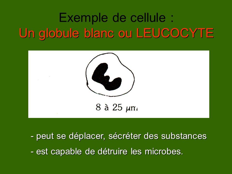 Exemple de cellule : Un globule blanc ou LEUCOCYTE