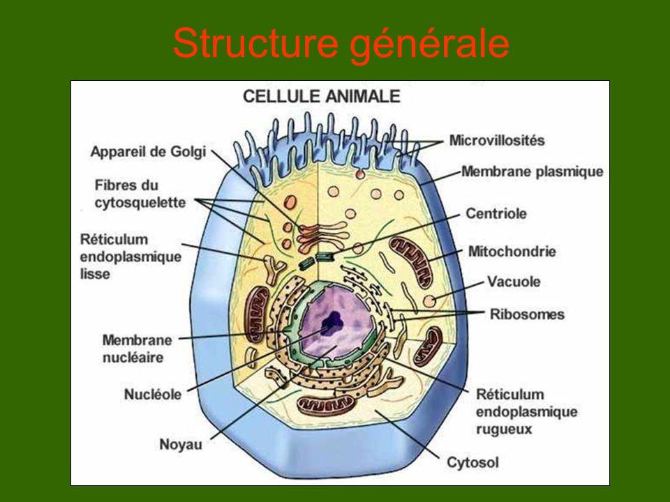 Structure générale Modèle général : il existe d'innombrable forme