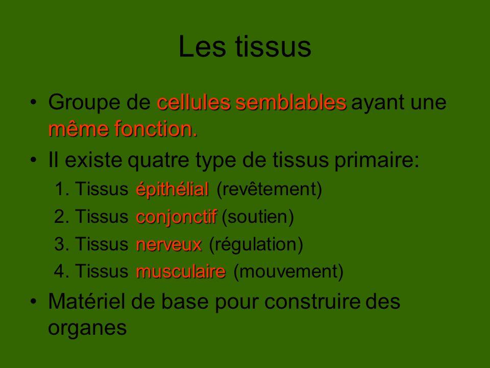 Les tissus Groupe de cellules semblables ayant une même fonction.