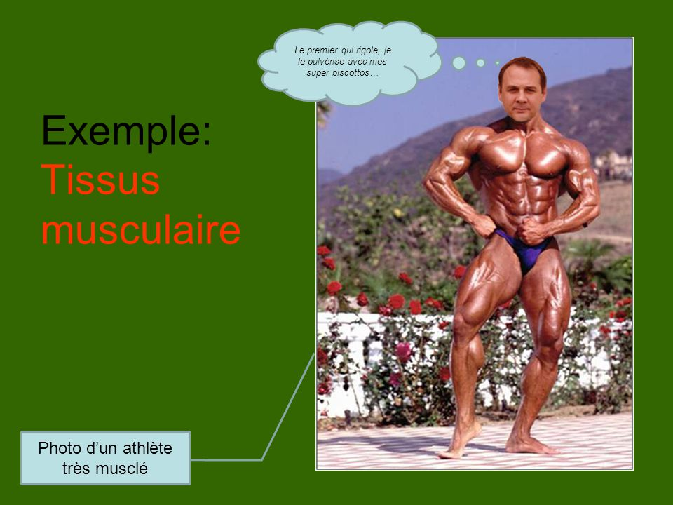 Exemple: Tissus musculaire