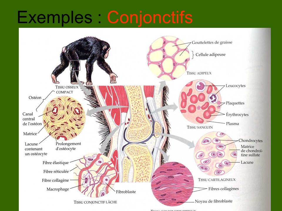 Exemples : Conjonctifs