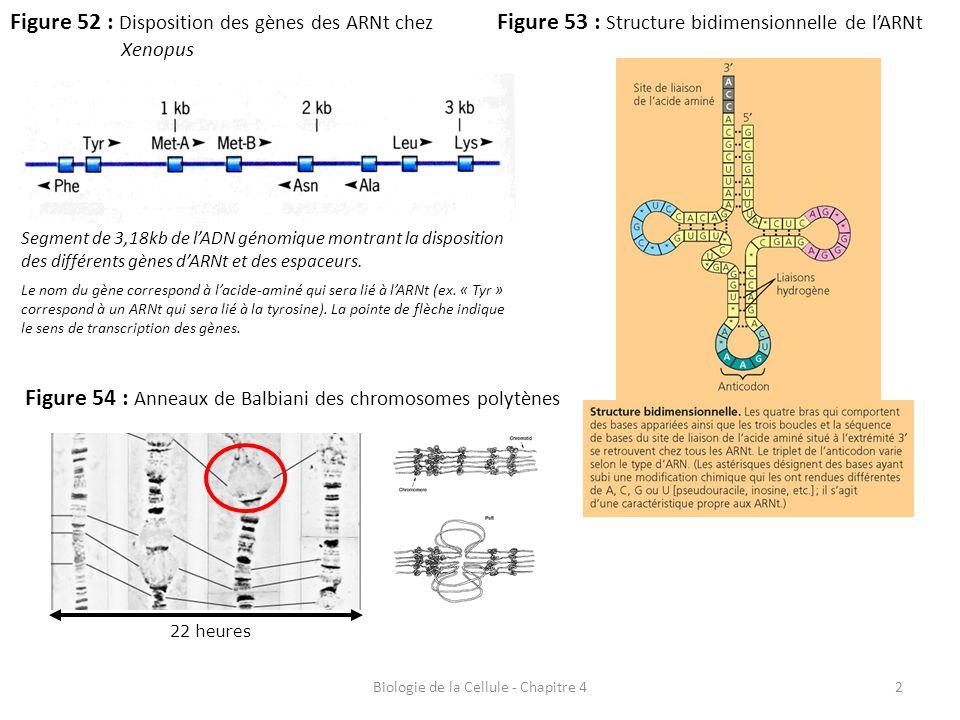 Biologie de la Cellule - Chapitre 4