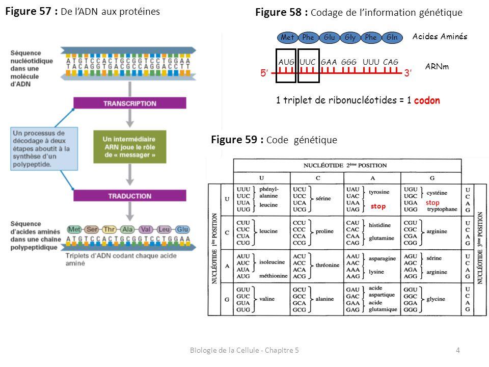 Biologie de la Cellule - Chapitre 5