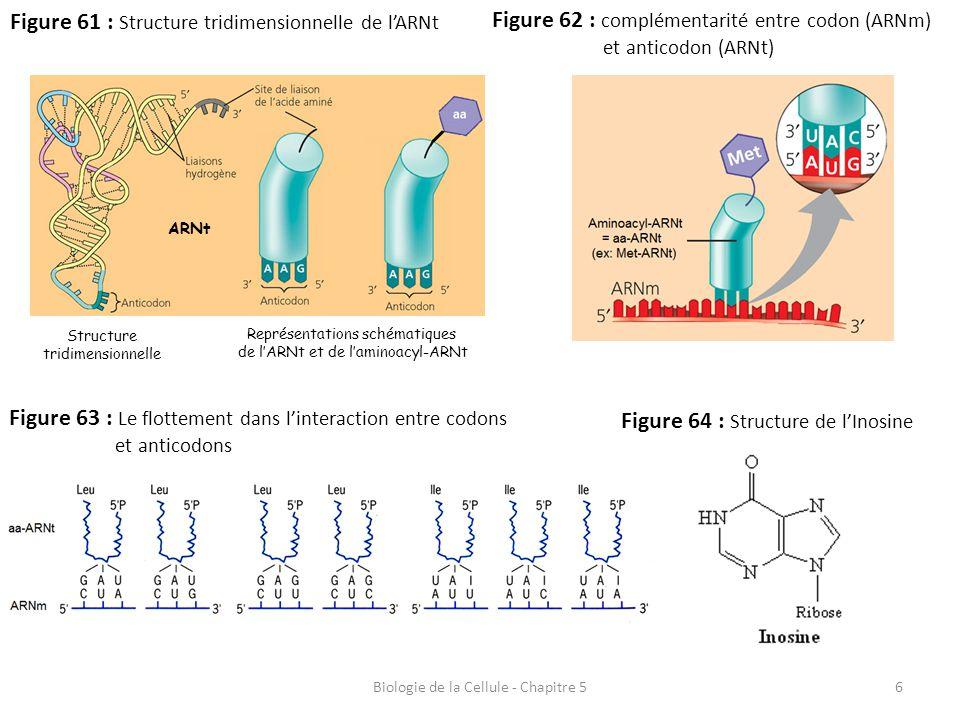Figure 61 : Structure tridimensionnelle de l'ARNt