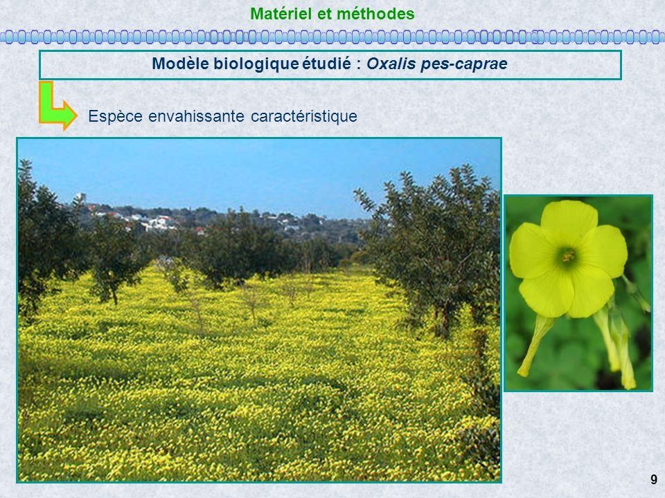 Modèle biologique étudié : Oxalis pes-caprae