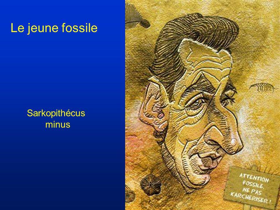 Le jeune fossile Sarkopithécus minus