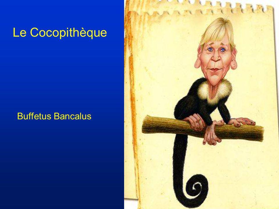 Le Cocopithèque Buffetus Bancalus