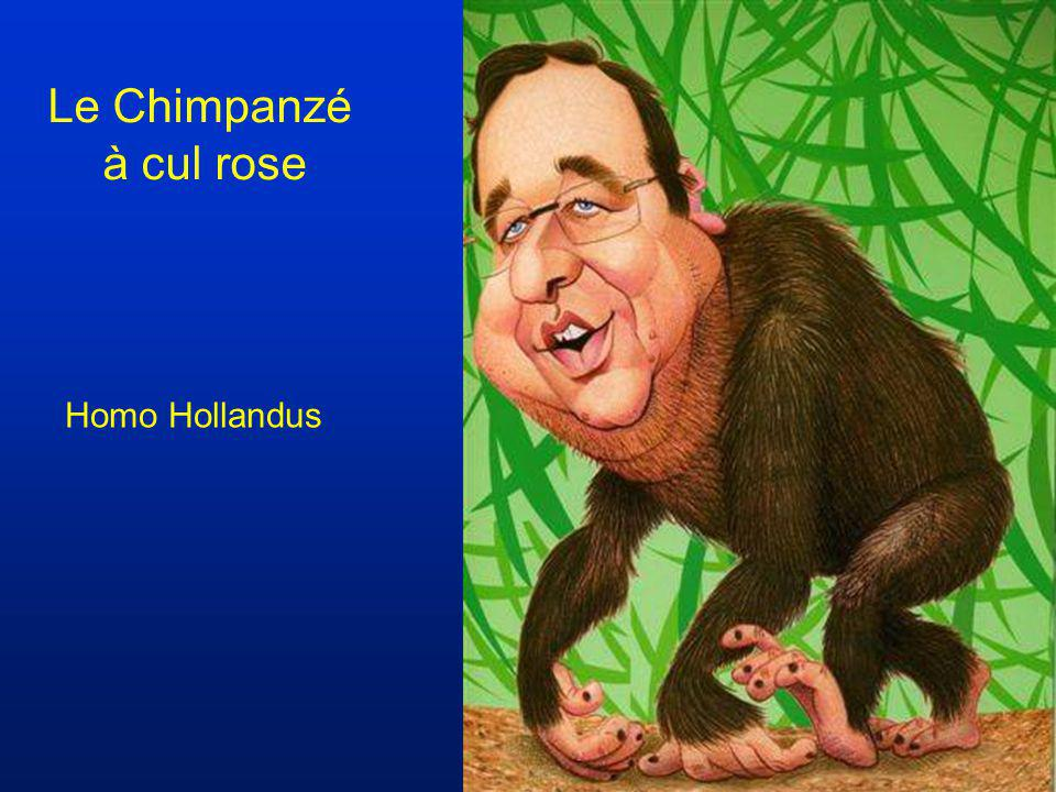 Le Chimpanzé à cul rose Homo Hollandus