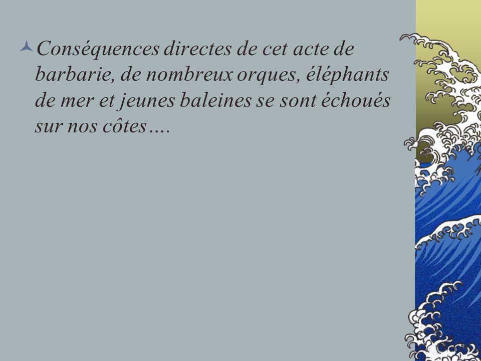 Conséquences directes de cet acte de barbarie, de nombreux orques, éléphants de mer et jeunes baleines se sont échoués sur nos côtes….