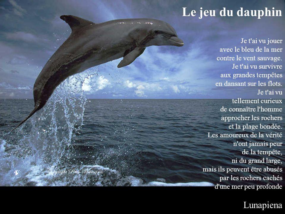 Le jeu du dauphin Je t ai vu jouer avec le bleu de la mer contre le vent sauvage.